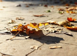 осінь у Франківську